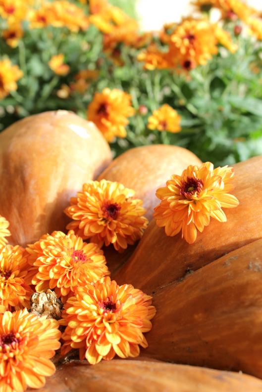 centrotavola_autunnale_zucche_fiori_crisantemo